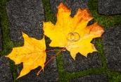 2012-10-20-180_web